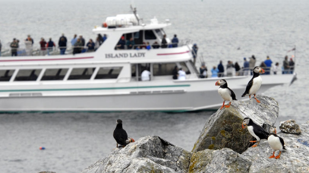 Bird Watch Boat Cruise